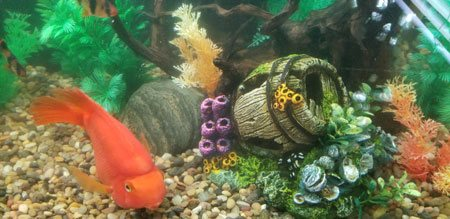 ADS Aquarium Services