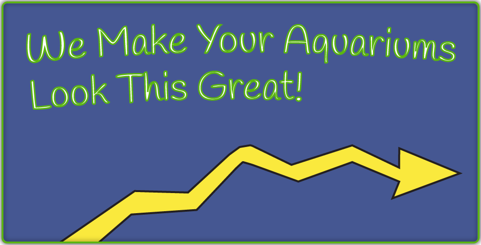 We make your aquariums look this great